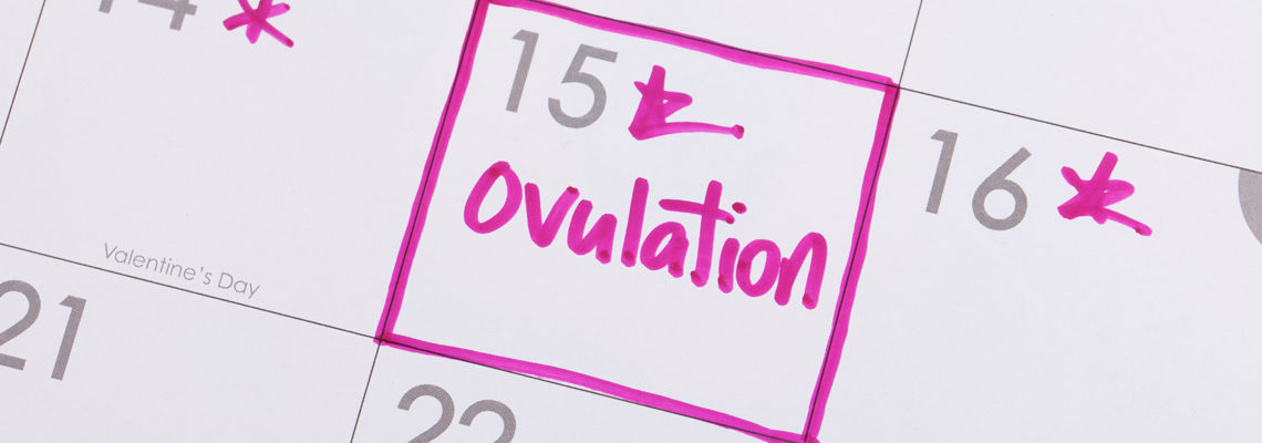 cycle d'ovulation